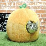 <สอบถามราคา> บ้านน้องหมาแมว ที่นอนน้องหมาแมว เบาะนอนน้องหมาแมว นำเข้าจากญี่ปุ่น รูปส้ม