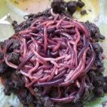 ไส้เดือน 100 ตัว (Blue worm) อาหารสดให้นก ปลา plant003