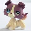สุนัขคอลลี สีครีมพลัม #1262 ตา 2 สี (หายาก)