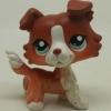 สุนัขคอลลี สีน้ำตาล #1542 (หายาก)