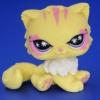 แมวเปอเซีย สีเหลือง #723