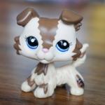 สุนัขคอลลี สีมอคค่า ตาสีม่วง (#2210)