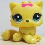 แมวเปอเซีย สีเหลืองโบชมพู #778